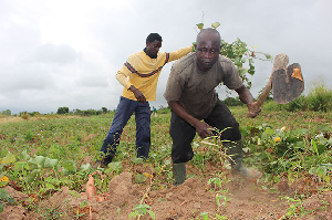 Coronavirus: Farmers decry input shortage
