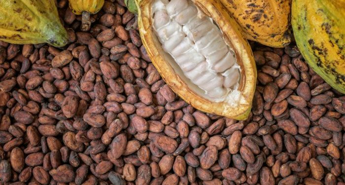 Reuters poll suggests cocoa prices may drop by 10% due to COVID-19